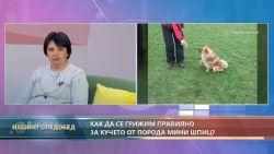 """""""Нашият следобед"""" с БСТВ (4.11.2020), гост: д-р Таня Гетова, ветеринар"""