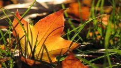 Наближава есенно захлаждане