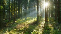 Тежки битки за горите на Костенец