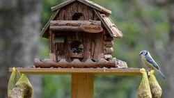 Интересна арт инсталация за птици се появи в столичен център за личностно развитие