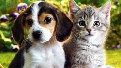 Мащабна кампания за популяризиране на отговорно отношение към домашните любимци и осиновяването на изоставени животни стартира днес