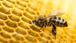 173 пчелни семейства загинаха в с. Струпец
