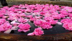 Законът за розата ще заличи поминъка на хората с малки стопанства