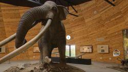 Палеонтологичният музей в Дорково е една от забележителностите в Родопите