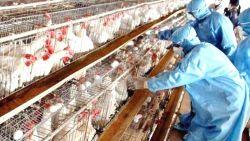 Пожар унищожи ферма с 30 000 кокошки в Пещера
