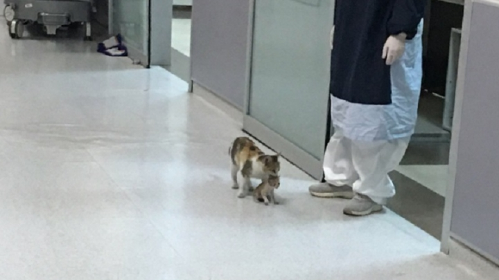 Улична котка потърси помощ в спешно отделение за болното си котенце