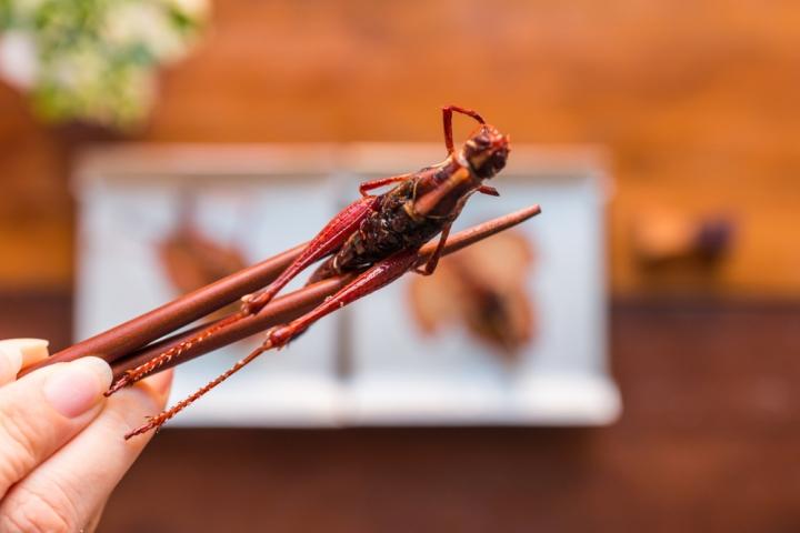 Топ 5 на най-вкусните и полезни насекоми