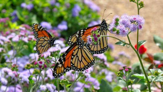 Изложба на живи пеперуди в Благоевград