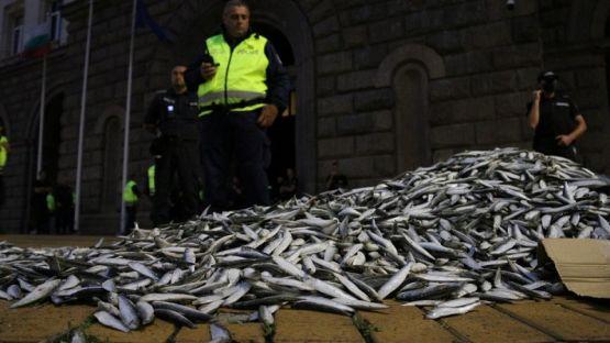 48-ми ден на протеста: Мъртва риба пред Министерски съвет