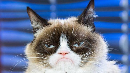 Световна скръб: Котката Гръмпи почина на 7 години
