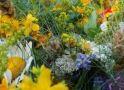 Еньовден – празникът на лечебните билки